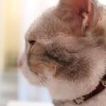 癒しを求めて第1弾「Cat Cafe Miysis(ミーシス)」ーかわいい猫ちゃんたちと戯れられる!ー