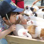 野毛山動物園へ行こう ~動物と触れあえ、子どもが大喜び~