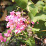 """昆虫という生き方 """"個体""""という考え方の違う世界 飯田みゆきのコラム 第3回"""