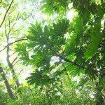 自然からひびく「五感の刺激」 〜飯田みゆきのコラム 第14回